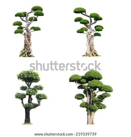 conlection of tooth brush tree isolated background - stock photo