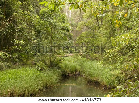 Conondale National Park, Queensland (Australia) About 130km north of Brisbane, inland from the Sunshine Coast. At the heart of the Upper Mary Valley forests and parks. - stock photo