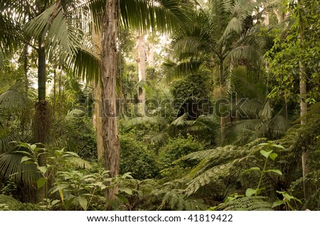 Conondale National Park, Queensland (Australia) About 130km north of Brisbane, inland from the Sunshine Coast. At the heart of the Upper Mary Valley forests and parks.