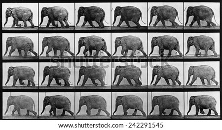 Consecutive images of an elephant walking. From Eadweard Muybridge's, ANIMAL LOCOMOTION, 1887. - stock photo