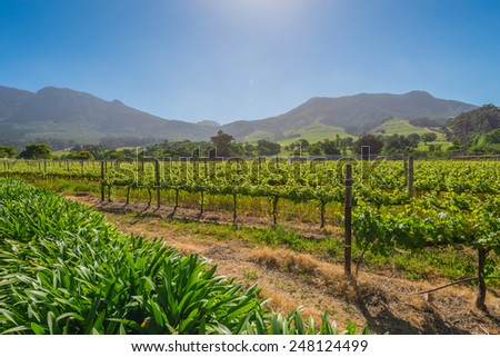 Constantia grape wineland countryside landscape background of hills with mountain backdrop in Cape Town South Africa - stock photo