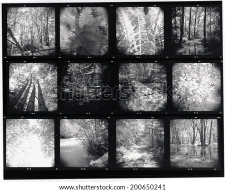 Contact sheet - scan from film, soft focus and slight grain visible at full size - stock photo