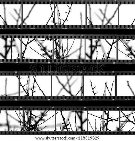 Contact sheet with photos of tree branches and twigs. Abstract background. - stock photo