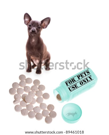 "Container with pills out with letters ""pets only"" +  dog on background ready to take some - selective focus on the medicaments - stock photo"