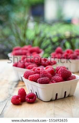 Containers with Delicious Organic Fresh Raspberries from Local Farm - stock photo