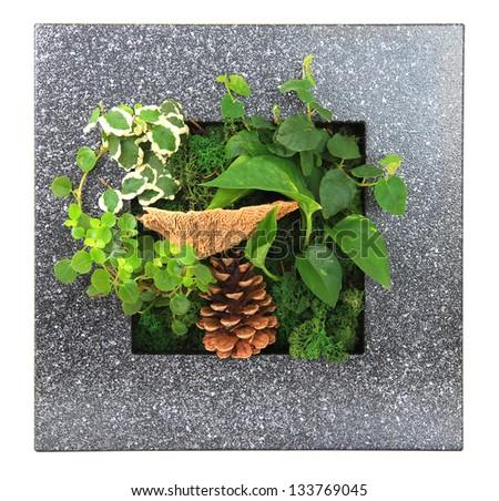 Contemporary green moss wall planter. - stock photo
