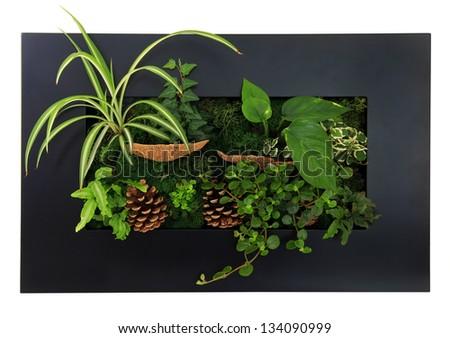 Contemporary moss wall planter. - stock photo