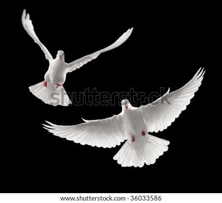continuous shots of dove flying towards you - stock photo