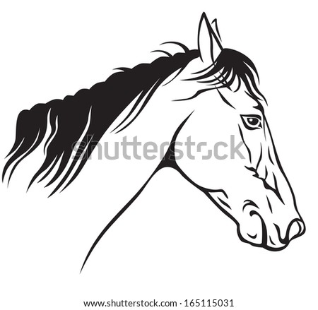 Contour image of a beautiful horses profile