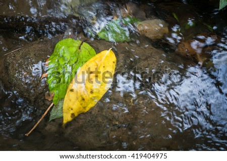 Contrast leaf in water stream