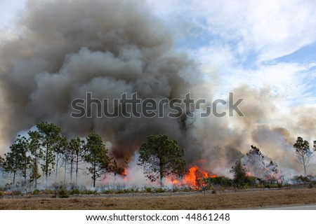 Controlled forest fire in Central Florida. Flames are well developed in this image, with brush fully engaged and pine trees in various stages of burning. Black smoke billows from the flames. - stock photo