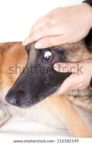 Controlling the eye and the conjunctiva of a dog