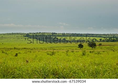 Conversion of native atlantic rainforest for pasture in northwestern Parana, Brazil. - stock photo