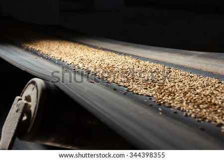 conveyor belt with barley at beer factory - stock photo