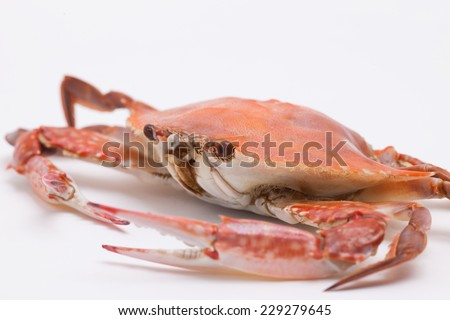 Cooked crab isolated on white background - stock photo