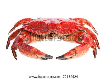 Cooked crab on white background - stock photo