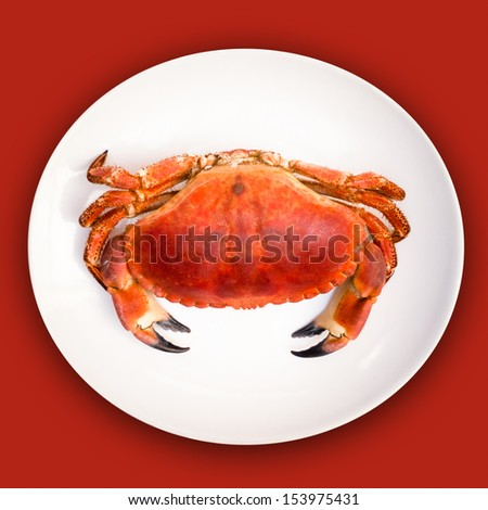 Cooked crab on white plate against red background, overhead view - stock photo