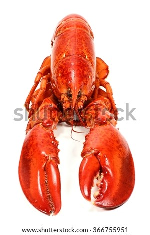 cooked lobster isolated on white background