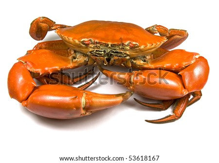 Cooked Mud Crab (Scylla Serrata)