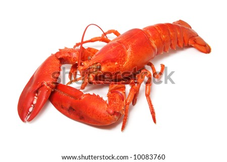 cooked red lobster isolated on white - stock photo