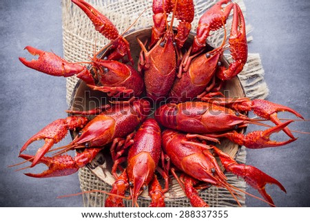 Cooked river crayfish on the grey background. - stock photo