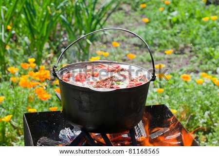 cooking crabs in a pot over a fire in the nature - stock photo