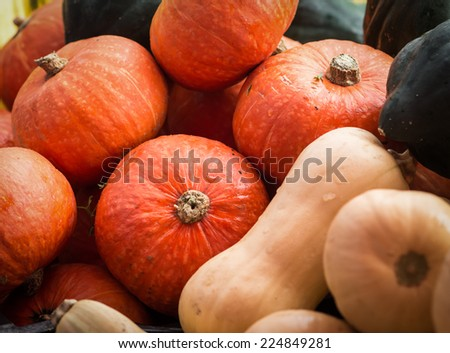 Cooking pumpkins, butternut squash and acorn squash at an October farmer's market. - stock photo