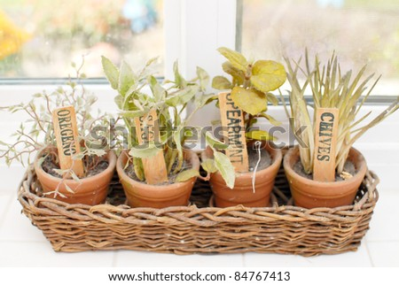 Cooking Spice Plants on Window Sill - stock photo