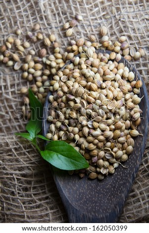 Cooking Spices, Coriander Seed on wooden spoon