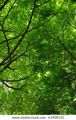 cool and refreshing under the shade of tree - stock photo