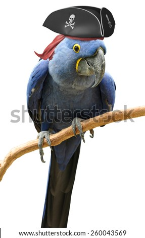 Cool and unusual pirate parrot bird portrait - stock photo