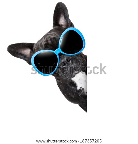 cool dog behind white blank banner or placard - stock photo