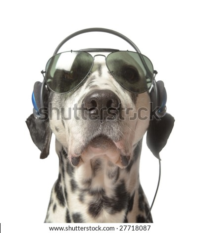 Cool Movie Director, or grooving dalmatian - stock photo