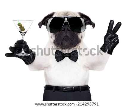 cool pug dog with martini glass and peace or victory fingers, - stock photo