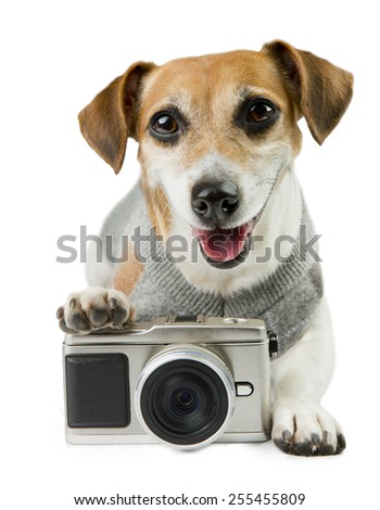 Cool pup Jack Russell terrier photographer smiled contentedly in an elegant pullover - stock photo