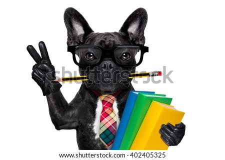 cool  school french bulldog dog, with stack of books and pencil in mouth , victory and peace fingers ,isolated on white background - stock photo