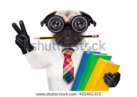 cool  school pug dog, with stack of books and pencil in mouth , victory and peace fingers ,isolated on white background - stock photo