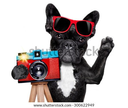 cool tourist photographer dog taking a snapshot or picture with a retro old camera gesturing to say cheese , isolated on white background - stock photo