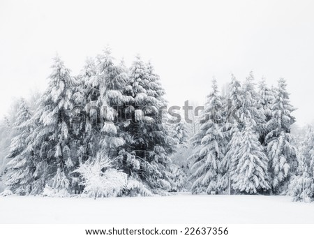 Cool winter trees, first snow - stock photo