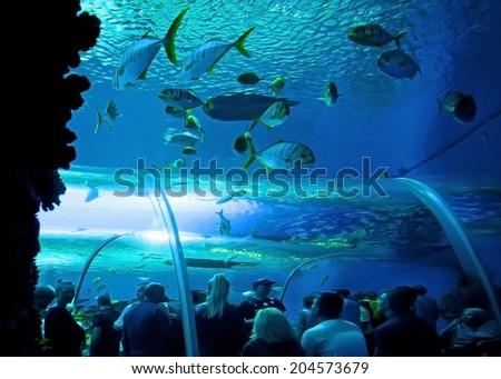 COPENHAGEN, DENMARK - JULY 1: Under water glass tunnel in Blue Planet National Aquarium Denmark on July 1, 2014 in Copenhagen - stock photo