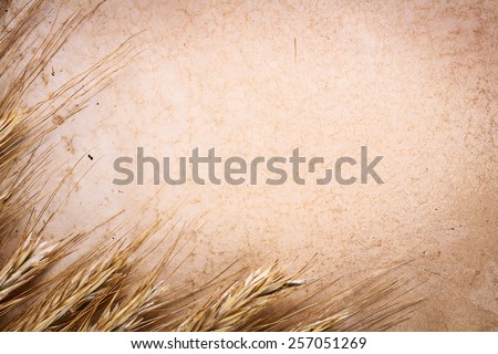 copyspace background ears of wheat on vintage blank paper with place for your text  - stock photo