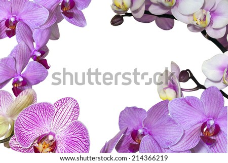 copyspace outlined by a variety of pink phalaenopsis orchids - stock photo