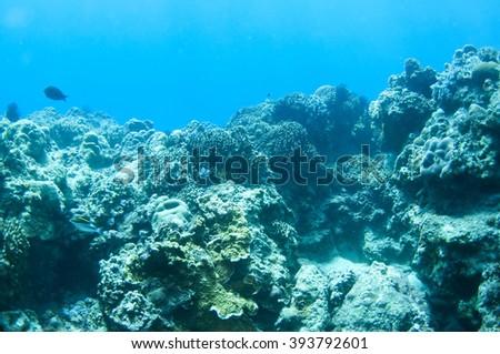 Corad reef of sunbeams in blue water - stock photo
