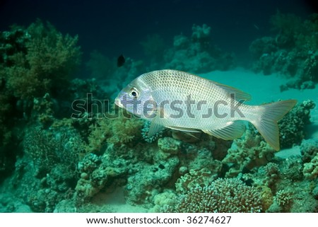 coral and emperorfish