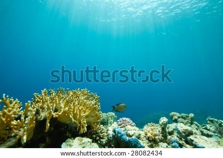coral and fish around Sha'ab Mahmud - stock photo