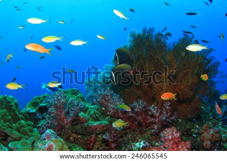 Coral and fish in ocean - stock photo