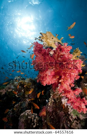 Coral and fish in the Red Sea. - stock photo