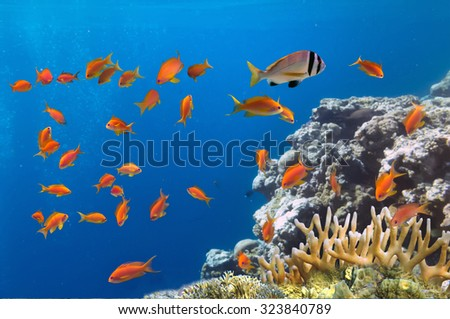 Coral and fish in the Red Sea.Egypt. - stock photo