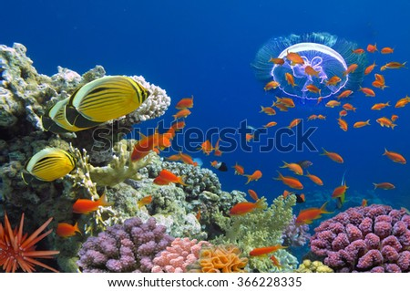 Coral and fish in the Red Sea. Egypt                          - stock photo