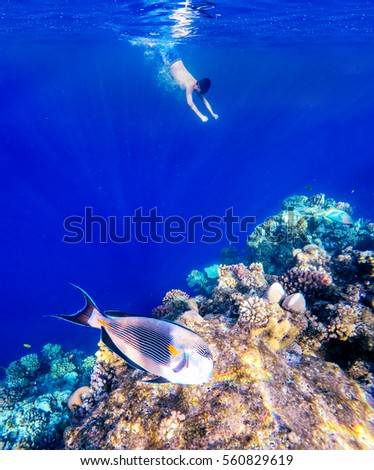 Stand paddle boarder exercising ocean stock photo for Other fish in the sea